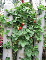 Cheap Free shipping 200pcs Red Climbing Strawberry Seeds Bonsai Plants Four Seasons Decorate Full Of Love Home Garden Fruit