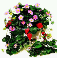Cheap Rare Exotic Pika Strawberry Seeds Outdoor Green Plants Perennial on Next Year for Your Happy Fruit Garden