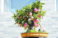 Семена цветущие Цены-Пробный продукт Бонсай Семена яблони 20 шт семена яблока (используется мокрый песок прорастание) фрукты бонсай сад в цветочных горшках плантаторов