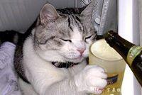 aluminium tags - Personalized Love Shape Double Side Aluminium Engrave Dog Cat Pets ID Tags