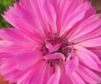 Cheap seed Best flower bulb