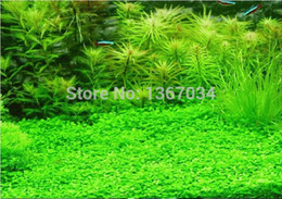 Wholesale 10g pack about pack of kinds Aquarium Grass Water Aquatic Plant Seeds DIY fish tank back ground painting plant flower pots