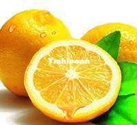Cheap Flower Seeds seeds Best Succulent Plants Subtropics Lemon Tree