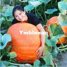Wholesale Top Grade pack Super Big Chinese Pumpkin seeds Vegetable Seed Hongkong Post