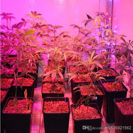Acheter en ligne Led grow bleu ampoule-50x vente Hot New hydroponique Éclairage E27 10W Jardin LED Lampe Ampoule 3-Rouge 2 Bleu pour la floraison des végétaux et la culture hydroponique système 85-265V