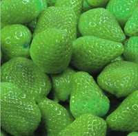 Cheap pack strawberry Best green strawberry