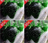 Cheap 100 seeds Best strawberry seeds