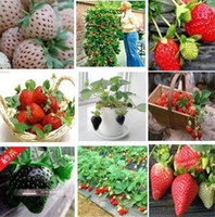 Cheap Garden plants free shipping 3 kinds strawberries seeds Total 150 seeds, Germination 95% fresh, A+