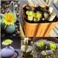 Cheap Garden plants Free shipping * 30 seeds Lithops Variety MIX flowering rock succulent stone seed A++