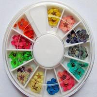 Cheap Wholesale 60pcs wheel Dried Flowers Dry Acrylic Nail Art Decorations Design, 20wheel Lot + Free Shipping