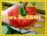 Cheap 200 PCS Big Palm Strawberry Seeds, very delicious Fruit Seeds, rare Plants in Canada