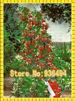Cheap seeds Best bonsai