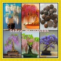 al por mayor árbol bonsai-plantas de alto grado, semillas de glicina de mini bonsai 50 PC, 5 clases de color de 10 PC por paquete, semillas del árbol de glicinas