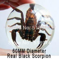 animal specimen - Real Black Scorpion in Clear Resin Ball Marble Insect Specimen Sphere so Cool Boy Gift mm Diameter Birthday Gift