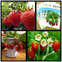 Cheap Organic Vegetable and Fruit Seeds Best Strawberry Seeds Bonsai Plants
