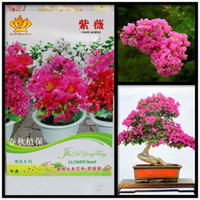 Cheap Crape Myrtle Tree Seeds Best Bonsai Flower Seeds Potted Plants