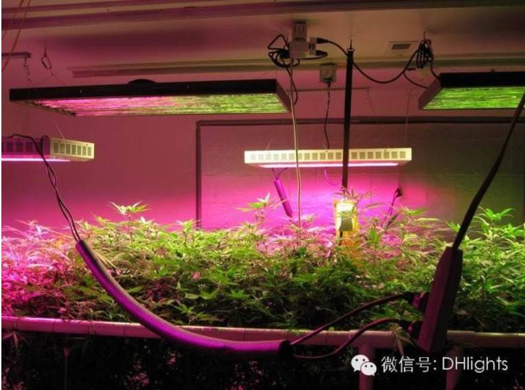 外贸电商LED植物生长灯市场分析