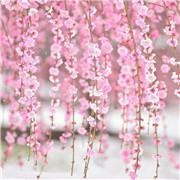 2M Artificial Flower Cherry Blossom Wedding Garland Vine Leaf Hanging Decoration