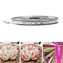 5 M LED Phyto Lamps Full Spectrum LED Strip Light