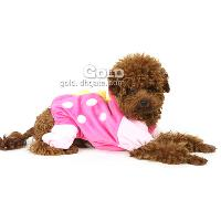 Stylish Pet Clothing with Dinosaur Shape LX- 4249