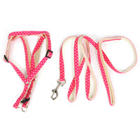 Durable Pet Harness Attached with a Leash from Professional ...