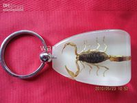 Wholesale 30 Days Return Guaran keychain and car keyring with different lovely unique insect specimen in amber