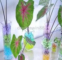 Wholesale 200 Bags g bag Water Plant Jelly Crystal Ball Soil magic soil multifunction crystal soil