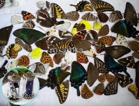 Wholesale Butterfly Specimens - 20pcs real butterfly wings,3D Butterfly specimens wings,Real Dried Moth butterflies wings for ring earrings necklace