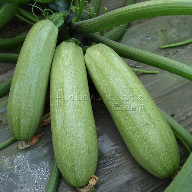 Бесплатная доставка 20 свежесобранные цуккини семена хороший вкус овощи DIY приготовления