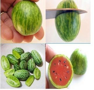 Овощи и фрукты семена 100 шт. мини арбуз семена вкус как огурцы бонсай растения семена для домашнего сада