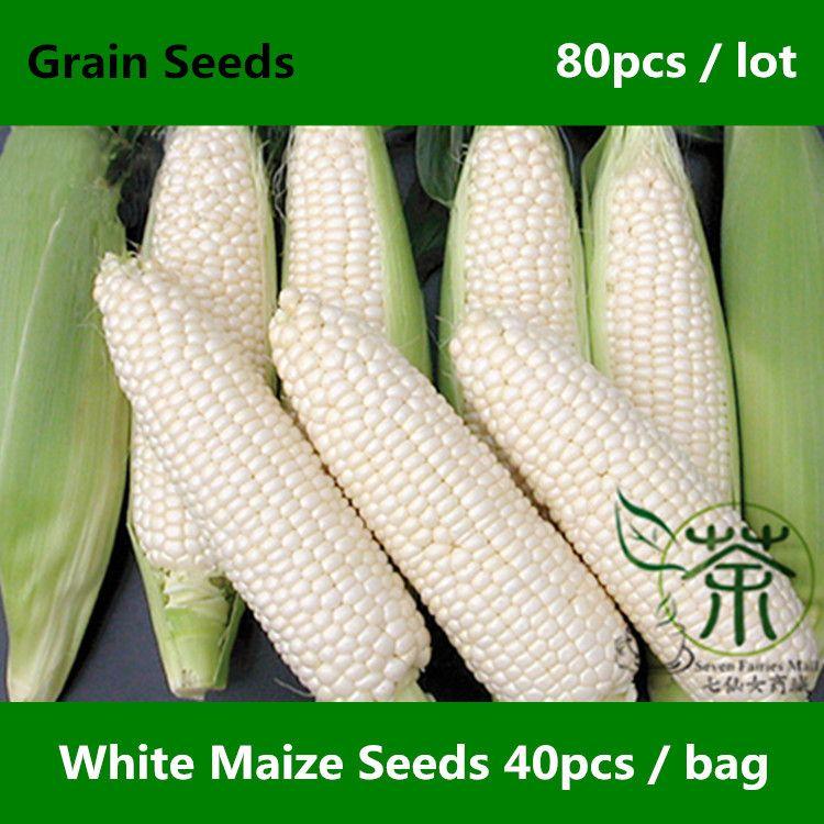 Высокая пищевая ценность здоровье белые семена кукурузы 80 шт., высокая урожайность и качество зерна семена, специально для супермаркетов Zea Mays семена кукурузы