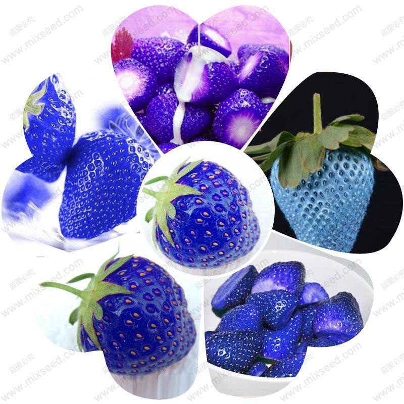 Semi di fragola frutta biologica semi rara di frutta blu fragola fragaria ananassa dolce blu - 200 pz