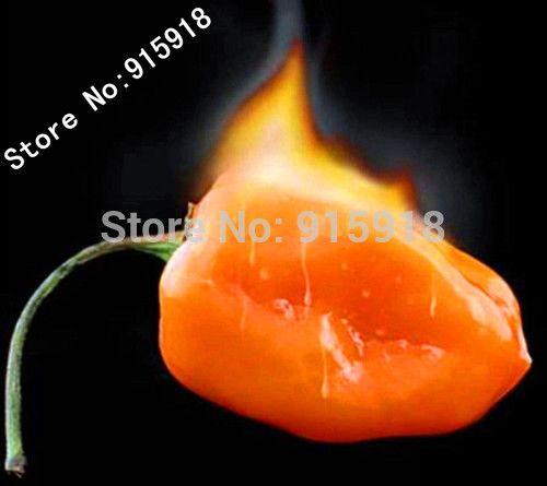 Habanero Orange Chilli Pepper Plant - 100 pcs Vegetable seeds- Extremely Hot !Home gardening DIY!Free shipping!