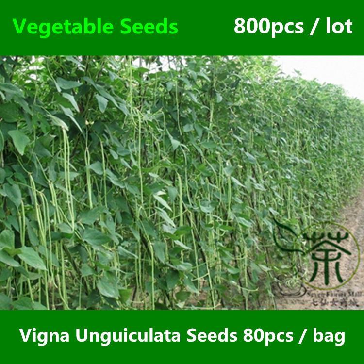 Длинный китайский Unguiculata 800пк семена фасоли Вигна, долго-podded змея вигны семена овощной фасоли, мини-сад спаржевой фасоли семена
