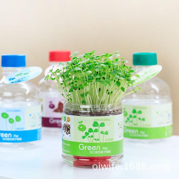 Garip yeni canlı şişe anyon saksı dikim çiçekler DIY DIY bonsai succulents yağ bir nesil vermek
