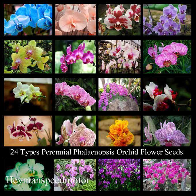 Cattleya Orchidplant: 2020 Fake Silk Cattleya Orchid