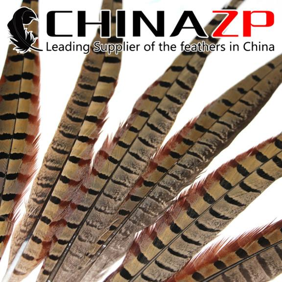 Leading Supplier CHINAZP Crafts Factory 50pcs/lot 25~30cm (10~12inch) Length Good Quality Natural Ringneck Pheasant Tail Feathers