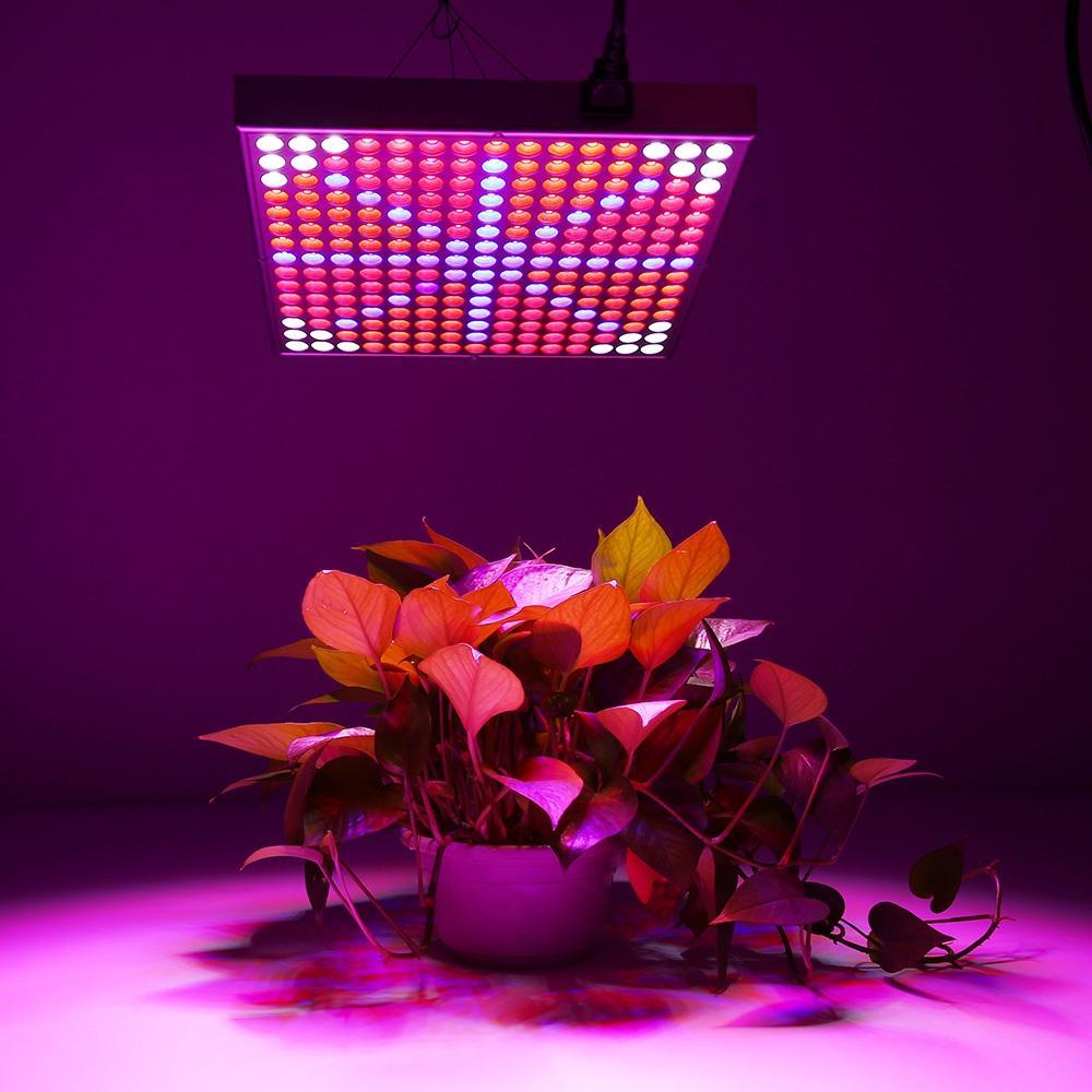 높은 품질 300W 전체 스펙트럼 주도 성장 빛 85-265V 성장 텐트 상자 / 실내 온실에 대 한 램프를 성장 / 상업용 수력 발전소