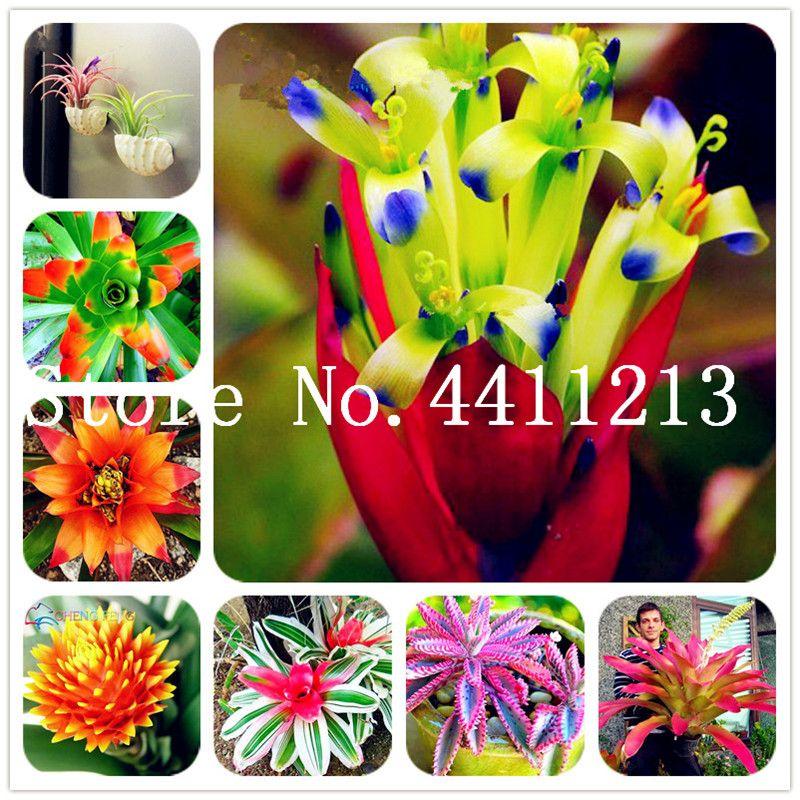 100pcs Rare bromélias sementes de plantas de flor de legumes frutas bonsai jardim planta suculenta Mini Cactus Pots baratos do arco-íris Crianças Bonsai flor