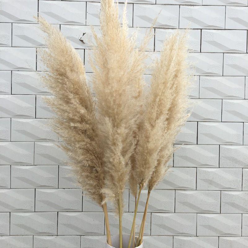 3adet Doğal Reed Kurutulmuş Çiçek Pampas Çim Buket Düğün Çiçek Seremonisi Dekorasyon Modern Ev Dekorasyon 60cm Uzun