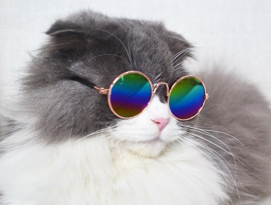 Pet Cat Glasses Small Dog Eyewear Sunglasses Photos Props Puppy Eye Protection
