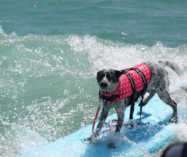 Piccolo cane pet giubbotto di salvataggio vestiti per il surf nuoto maglia estate cane cucciolo costumi da bagno spiaggia vacanza toro Pug xxxxl