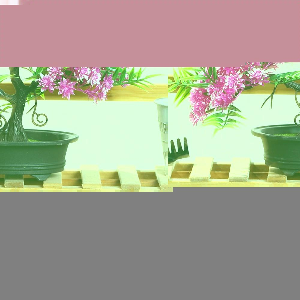 New 100pcs Beautiful Red White Osiria Ruby Rose Flower Seeds Garden Plant H Z2K0