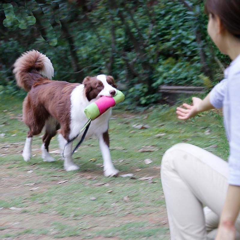 Dog Training Pet Treat Snack Bait Dog Obedience agilidade ao ar livre Bolsa Food Bag Cães Snack saco de embalagem Pouch 2018 Hot Dog Moda Formação Obe