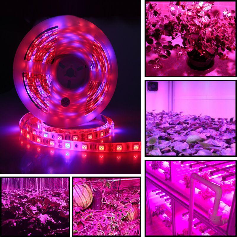 5 م الصمام مصابيح نباتية الطيف الكامل LED قطاع الخفيفة 300 المصابيح 5050 رقاقة LED Fitolampy تنمو الاضواء للنباتات المسببة للاحتباس الحراري المائية