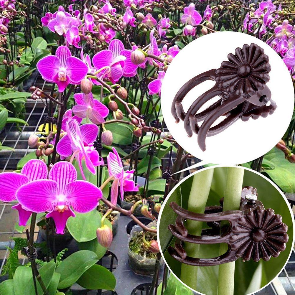 100pcs crescer clipes Vertical Alongamento Ferramenta de Jardim Decoração de plástico Hastes da orquídea Flor Vine de suspensão Apoio Planta Stalks Fix
