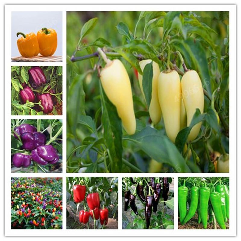 2020 Mixed Seedsyellow Puple Red Green Whitesweet Bell Hot Pepper Chili Bonsai Vegetables Paprika Bonsai Plant For Home Garden From Ymhzpy 2 81 Dhgate Com
