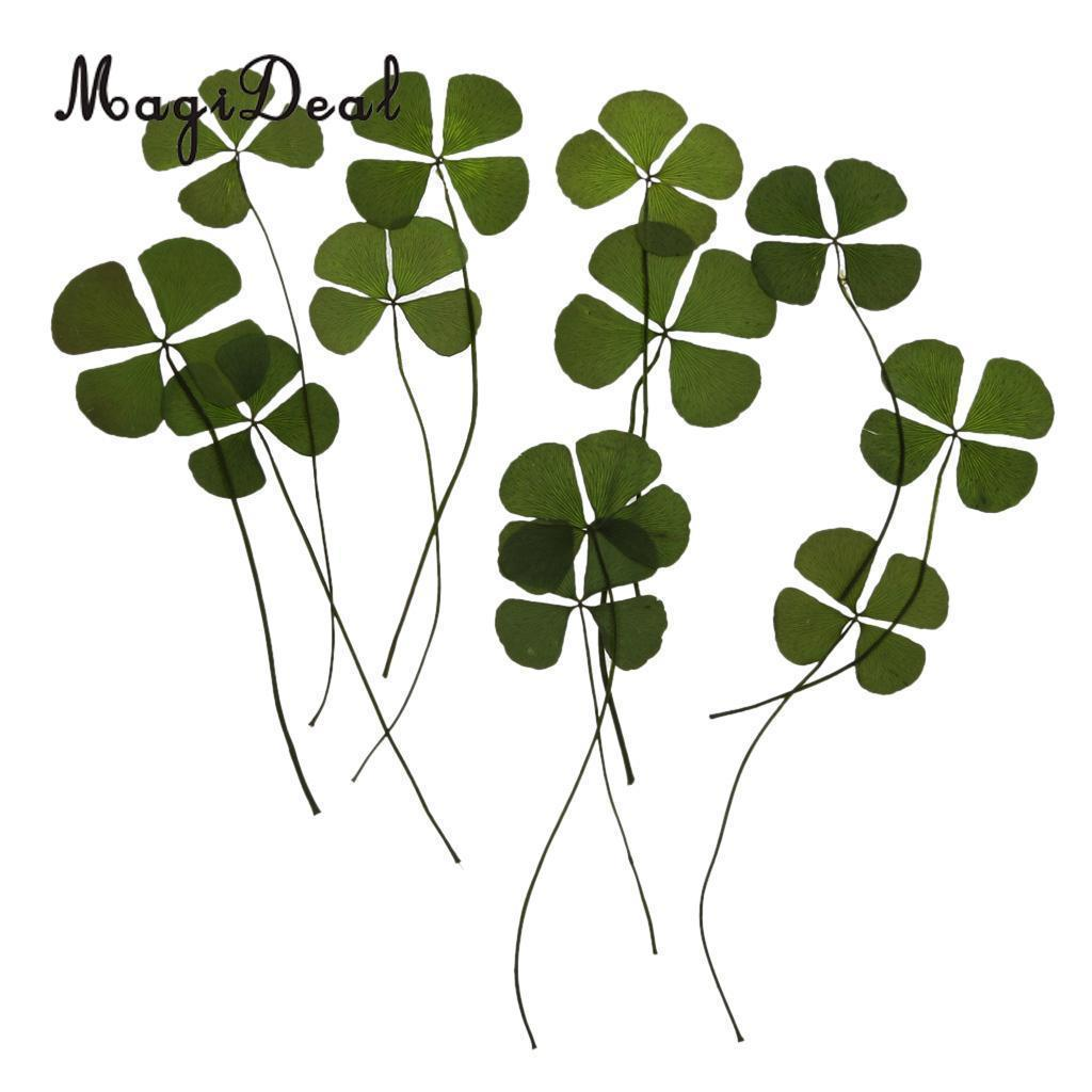 12 Real Pred Four Leaves Dried flowers Embellishments Card Making Scrapbooking Jewelry Furniture DIY Decorating