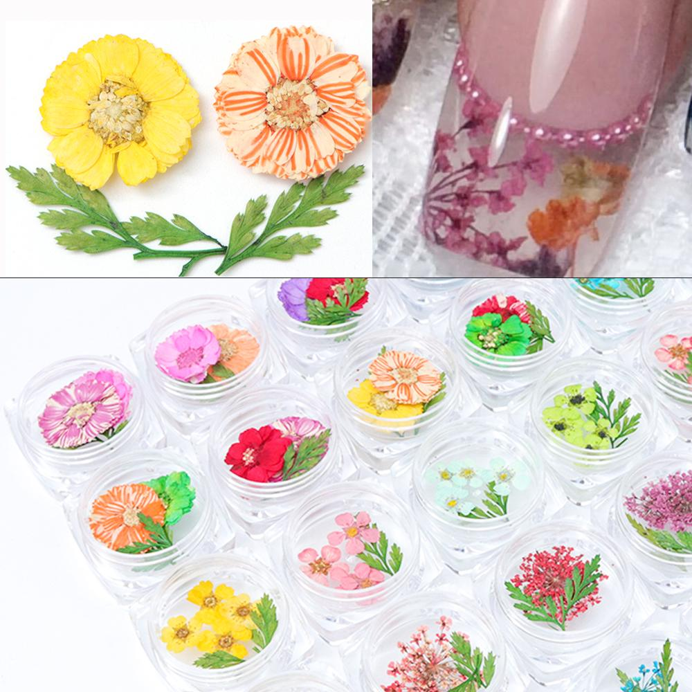 24 Types Available Real 3D Dry Flowers Nail Decoration Summer Fashion Acrylic Natural Floral DIY Nail Art Stickers Tips TRFL01-2