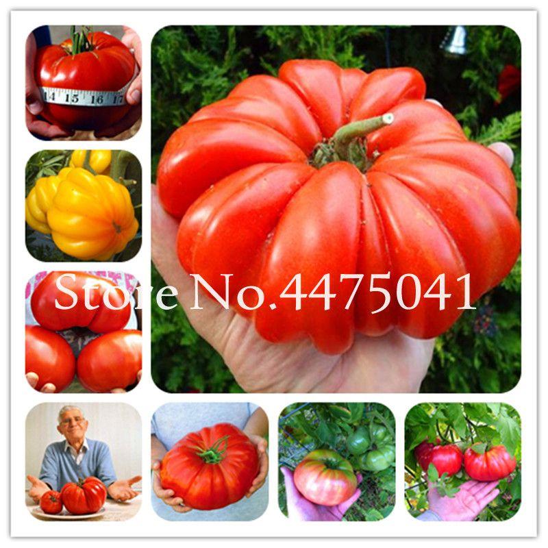 1000 pc arc-en-ciel graines de tomates 2020 nouvelles plantes d'arrivée Heirloom bio bonsai légumes herbes nourriture pour la maison de jardin